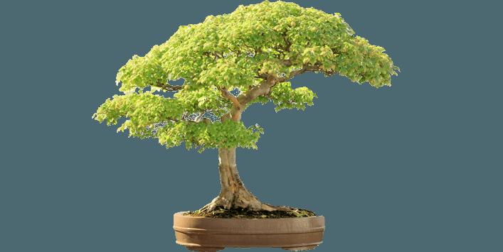 Manutenzione giardini, potature alberi e siepi a Capena